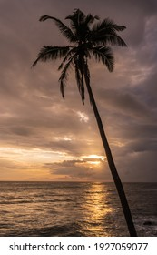 Palm trees against the setting sun and ocean, picturesque landscape.