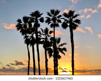 Palm trees against sunset sky in California.