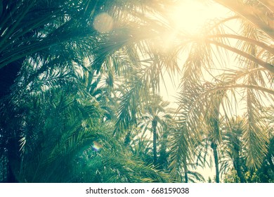 Palm Trees In Alicante In Spain With Sun And Sky On A Sunny Day