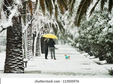 Palm trees alley under snow and a couple with a dog