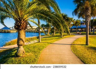 Palm trees along a path in Daytona Beach, Florida.
