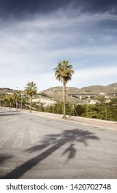 palm trees along a road in almunecar spain with nobody about