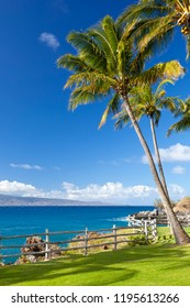 Palm trees along the rocky coastline at Napili Point in Maui, Hawaii with view to Molokai.