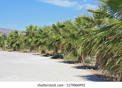 Palm trees in Andalusia, Spain, summertime.