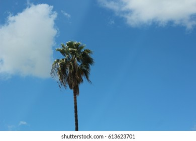 PALM TREES AROUND THE CITY IN SAN DIEGO,CALIFORNIA