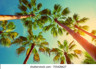 palm trees in backlit