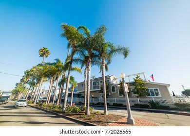 Palm trees in Balboa Island, Newport Beach. California, USA