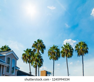 Palm trees in Balboa island under a blue sky, Newport Beach. Southern California, USA