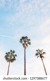 Palm trees in Barcelona, Spain