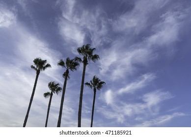 Palm Trees at the Beach and Blue Morning Sky