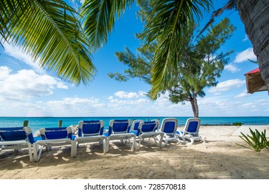 Palm Trees and Beach Chairs
