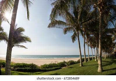 Palm trees in the beach in Mancora, Piura, Peru.