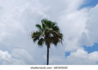 Palm Trees - Beach, Resort, Tropical, Ocean, Vacation, Trip, Travel