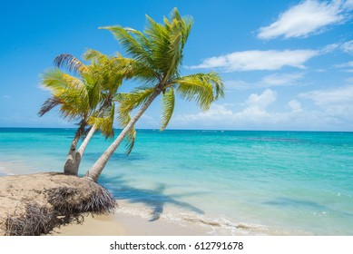 Palm trees at a beach in Samana, Dominican Republic.