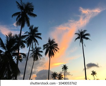Palm trees and beautiful sky