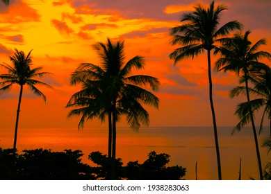 palm trees Beautiful sunset on the tropical sea beach on nature pink background