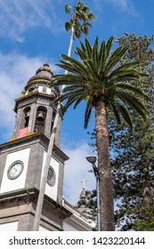 Palm trees and bell tower of the cathedral, in the city of La Laguna, Tenerife, Canary Islands