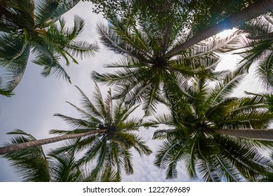 Palm trees from below, tropical summer background