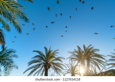 Palm trees birds