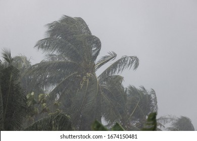 Palm trees blowing in the wind during hurricane