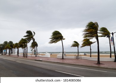 Palm trees blowing in the winds at tropical beach.
