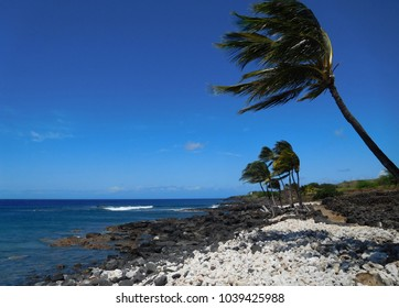 Palm trees are blown by the strong wind at Lapakahi State Historical Park in Waimea, Hawaii.