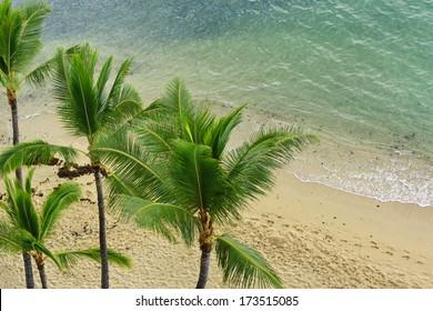 Palm trees and blue green water, serene sandy beach in Waikiki, Hawaii