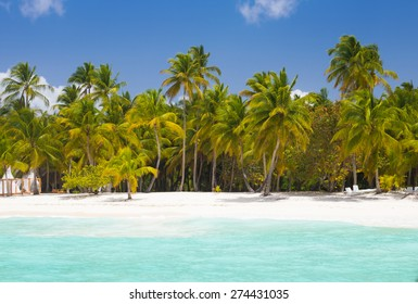 Palm trees at blue lagoon on caribbean wild beach in Dominican Republic