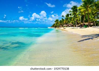 Palm trees, blue sea and sunbeds on Saona Island, Dominican Republic