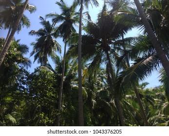 Palm trees blue skies