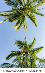Palm Trees with Blue Sky 2