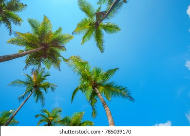 Palm trees and blue sky