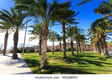 Palm Trees with blue sky background, Barcelona, Spain