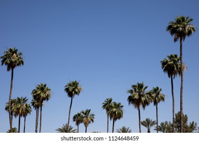 Palm trees with blue sky copy space