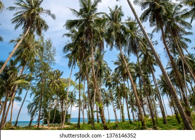 Palm trees with blue sky and sea at Leam son beach, Koh Mak island, Trat, Thailand