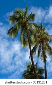 Palm trees and blue sky with white clouds behind
