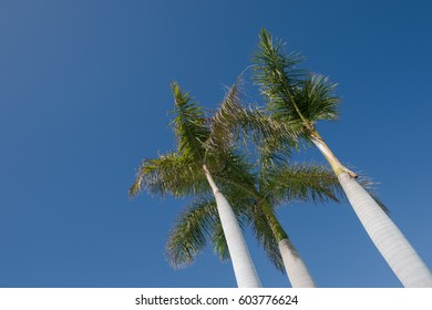 Palm trees in blue sunny sky, low angle view