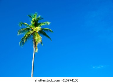 palm trees in the blue sunny sky
