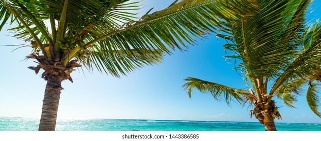 Palm trees and blue water in Raisins Clairs beach in Guadeloupe, French west indies. Lesser Antilles, Caribbean sea