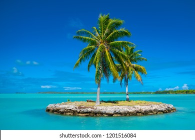 Palm trees in Bora Bora, Tahiti