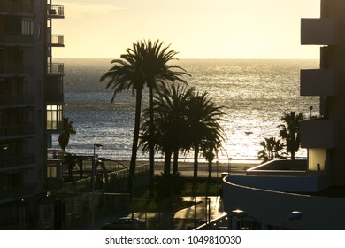 palm trees by the beach in spain. Taken during sunrise hours