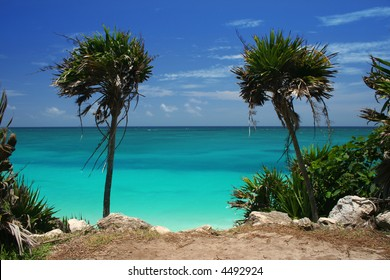 Palm Trees by Ocean