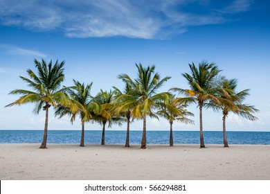 Palm trees by the ocean in Key Biscayne, Florida