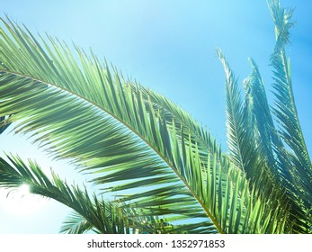 Palm trees by the sea - summer vacation, beautiful nature and travel concept. Beauty of the tropics