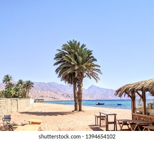 Palm trees by tge beach at Dahab, Sinai peninsula, Egypt. Misty Sinai mountains are in the background.