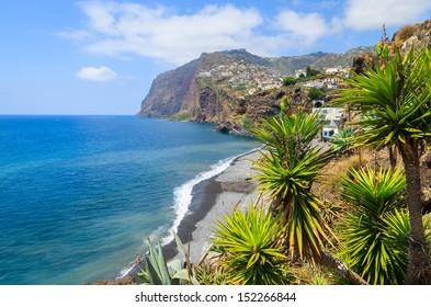 Palm trees and Cabo Girao cliff ocean view, Camara de Lobos town near Funchal, Madeira island, Portugal