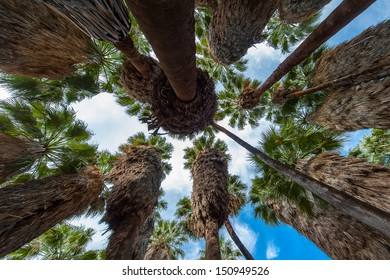 The palm trees in the canyon under the blue sky
