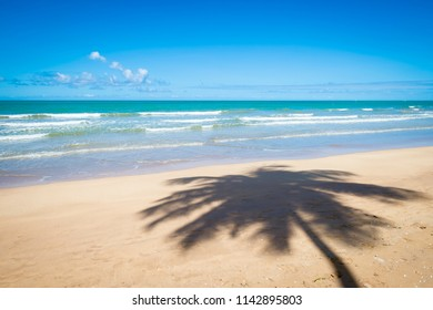 Palm trees cast shadows on wide remote tropical Brazilian island beach in Bahia