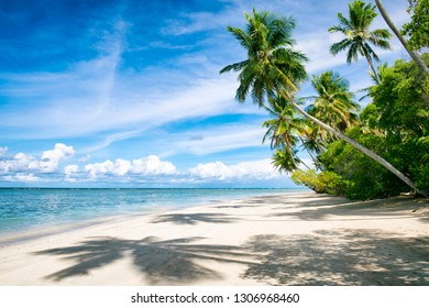 Palm trees casting shadows on a wide remote tropical Brazilian island beach in Bahia Nordeste Brazil