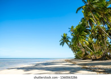 Palm trees casting shadows on a wide tropical Brazilian beach on a remote island in Bahia Nordeste Brazil